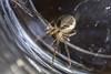 spider (jim w-y) Tags: spider longlegs 8legs web shed