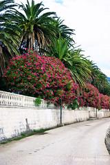(tatianatorgonskaya) Tags:              montenegro crnagora balkans balkanstravel nature summer august season  landscape         tree wood flowers south mediterranean