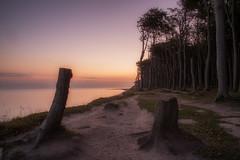 Gespensterwald - Ghostforest (Rainer Schund) Tags: gespenterwald gohstforest nikon natur nature natureexploring meer kste wald forest morgen morgens morning sunrise sonnenaufgang bume