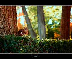 Squirrel in the park, Madrid (Borretje76) Tags: madrid park parque trees brown tree del 50mm squirrel little sony 14 sigma nut dslr retiro enschede spanje grren eenkhoorn a580 borretje76