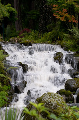 -6949 (rlcjr) Tags: alaska forest waterfall tongass