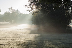 287_365_Early_morning_Mist_and_Sun (Damien Walmsley) Tags: morning sun sunbeam knowle jobsclose