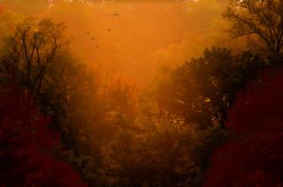 Autumn Woods Glenwood IMG_1351