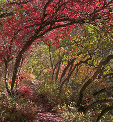 Beus Canyon (Rick Bolin) Tags: fall photography utah photo photographer photos ogden ogdenutah lumix20mmf17 rickbolin