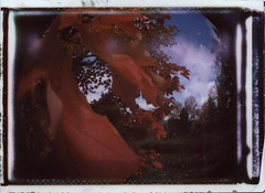 (abdukted1456) Tags: camera autumn trees ny newyork fall leaves toy polaroid lomo lomography mini fisheye plastic diana f albany 300 dianaf instax instantfilm instantback