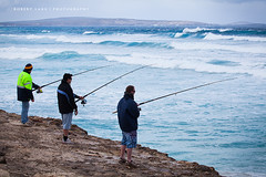 Fishing on the Eyre Peninsula - South Australia (Robert Lang Photography) Tags: ocean fish man color colour tourism beach nature water animal sport fun nationalpark fishing sand native sandy tail stock salt salmon australia coastal destination recreation sa southaustralia beachfishing ep animalia oneperson bigfish saltwater fishtail lincolnnationalpark threepeople bigsalmon chordata eyrepeninsula actinopterygii infauna perciformes australiansalmon salmonidae manholdingfish arripistrutta arripis arripidae aussiesalmon