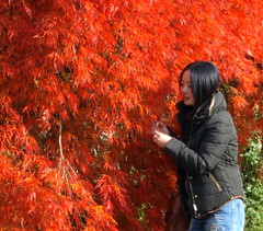 Woman with a red bush (Tony Worrall Foto) Tags: pictures uk autumn red wild england woman color fall nature beauty look leaves outside leaf bush colours shine fallcolor natural bright candid derbyshire seasonal chinese sunlit autumnal chatsworth tyree seson courful seasonalcolours chatsworthhousegardens 2012tonyworrall