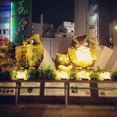 Ikebukuro เมืองแห่งนกฮูก?