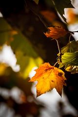 Autumn in Amsterdam (Dennis Burger) Tags: autumn fall amsterdam herfst thenetherlands nl noordholland wilhelminablombergplein