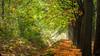 The dry ditch (Reina Smallenbroek) Tags: trees fall netherlands forest woods all herfst andromeda groningen sunrays bos leek sunbeams zonnestralen finegold greatphotographers theworldwelivein atutumn zonneharp westerkwartier canoneos450d reintjedevos naturebeauties yourarthastouchedtheworld canoneosdigitalrebelxsicanoneos450d universalelite planetearthourhome naturesprime dreamsilldream mygearandme mygearandmepremium mygearandmebronze mygearandmesilver mygearandmegold beautifulgroningen mygearandmeplatinum mygearandmediamond bestofnaturesprime ietsbovengroningen gemeenteleek photographyforrecreationlevel2 photographyforrecreationlevel3 goldstarawardlv1 flickrbronzesilvergoldaward photographyforrecreationlv1 greenbeautyforlife betterthangoodlv3 betterthangoodlv1 buildyourrainbowlv3 visionaryartgallerylv3 fotovideonu buildyourrainbowlv8 groningerwesterkwartier canon450dnederland niceasitgetslv7 niceasitgetslv8 mygearandmedec24