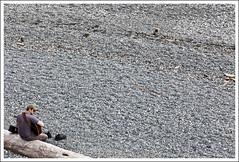 Rock concert (Gvomit) Tags: musician canada art beach canon rocks outdoor britishcolumbia naturallight victoria shore 5d plage roches tronc rivage rive cailloux musicien colombiebritanique 5dmarkii gvomit gvophoto
