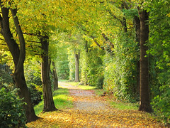 Autumn Walk (Habub3) Tags: park street wood city travel autumn trees light holiday tree green fall nature leaves forest canon germany landscape deutschland licht reisen flora europa europe stuttgart path walk urlaub herbst natur powershot stadt grn damm ufer wald baum embankment vacanze 2012 weg escarpment g12 deich enz besigheim herbstbild habub3 mygearandme