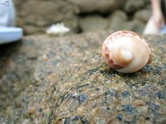 Conchinha *---* (Talita Leal - Fotografia) Tags: detail macro cute praia beach nature beautiful photography cool adorable like simple foco
