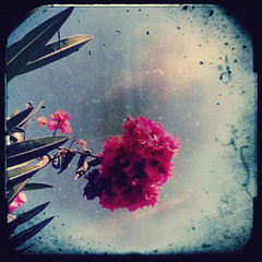 pink (meeeeeeeeeel) Tags: pink flower apple colors square colorful ipod lofi rosa squareformat corderosa lowres colorido fakettv iphoneography pixlromatic