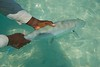 Bahamas Bonefishing - Andros Island 22