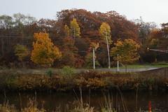 Bedford, NS (Avard Woolaver) Tags: autumn light canada colour landscape bedford photo flickr novascotia autumnleaves canondslr digitalimage hrm contemporarylandscape colouredleaves sociallandscape canoneos60d avardwoolaver avardwoolaverphoto
