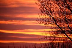 Goodbyes, they often come in waves. Jarod Kintz ( fotodisignorina  Felicia Violi PHOTOGRAPHY) Tags: trees sunset sky sun digital canon photography eos reflex waves dof bokeh branches dep goodbyes jarodkintz