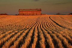 harvested rows (Harry2010) Tags: autumn sunset canada field landscape shed harvest saskatchewan grassland prairies stubble