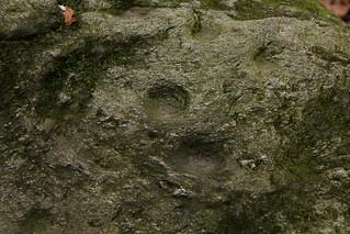 Dachsenstein ( Schalenstein / Findling / Erratiker  ) Geschützes Naturdenkmal ( Längholz Inventar: 53 ) im Findlingsreservat im Längholz bei Biel / Bienne im Berner Seeland im Kanton Bern in der Schweiz