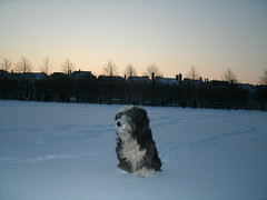 Winter in The Hague 2013 (Jo Hedwig Teeuwisse) Tags: winter snow cold dogs cat thehague