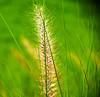 Grass (Shamim omi) Tags: city light tree canon dubai outdoor dhaka sharjah sx40 ishwardi ishurdi