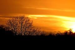 Lovely Sunset (DaveJC90) Tags: blue light sunset shadow red sky orange cloud sun sunlight black blur colour detail tree dark focus day colours afternoon background sunny sharp crop end croped sharpness