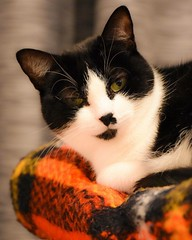 #cats #feline #felinos #gatos #pets #petphotography (lu trevisan) Tags: cats pets feline gatos felinos petphotography