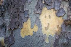 Sycamore smiley face (andiwolfe) Tags: columbus columbusohio franklinton ohio architecture bark smileyface sycamoretree urbanphotography