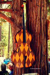 The Bass Of The Tree (Art By Pem Photography: Tao Of The Wandering Eye) Tags: fineartphotography canon canoneosrebelsl1 eos sl1 california southerncalifornia idyllwild pines trees jazz instrument bass pattern texture musicalinstrument music whimsical scenicsnotjustlandscapes socal festival travel usa popculture shapes