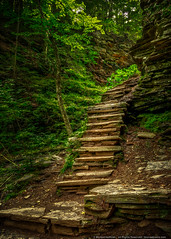 The Path of Least Resistance (mhoffman1) Tags: aurorahdr glenleigh hdr padcnr pastatepark poconos rickettsglen sonyalpha a7r forest hiking path rocks steps
