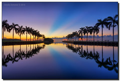 Early Morning Stillness (Fraggle Red) Tags: florida miamidadeco palmettobay miami deeringestateatcutler deeringestate keyhole royalpalms palmtrees dawn twilight reflections clouds rays hdr 7exp dphdr adobelightroomcc2015 adobephotoshopcc20155 canoneos5dmarkiii 5diii 5d3 canonef1635mmf28liiusm bravo