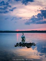 _DSC1872-1web (oolcgoo) Tags: sony alpha amount apsc adobe a77mii tokina dx2 pro 1116 tegel tegeler see berlin germany deutschland europe europa reinickendorf lake wasser water sundown sunset sonnenuntergang sonne sun swan schwan wolken clouds