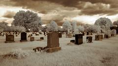 Not So Green Clouds (Adventures in Infrared) (Torsten Reimer) Tags: usa friedhof northamerica himmel cemetery cemeteryoftheevergreens brooklyn trees unitedstatesofamerica grabsteine infrared graveyard nyc newyorkcity gravestones sky queens clouds infrarot wolken olympusepl5 newyork unitedstates us