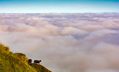 Sheep in the sky (cliveg004) Tags: inversion candyfloss sheep ewes clouds sky twmpa lordherefordsknob blackmountains wales southwales powys nikon d5200 1685mm rural countryside fog