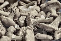 Still Life # LXXIX   ... ; (c)rebfoto (rebfoto (away on assignment)) Tags: chanterelles mushroom rebfoto stilllife naturemorte naturamorta