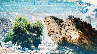 The Rock and the tree... #Ephesus #theatre #museum #turkey #tourist #travel #exlpore