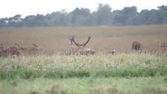00023.mp4 (ChrMous) Tags: nederland landschapvzw nationaalparkhogeveluwe veluwe sonyslta99