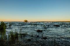 20160828-IMG_7743-WM (Pamela McLellan Zmija) Tags: saugeenshores portelgin sunset beach lakehuron goblesgrove sunshine pamelamclellanzmija