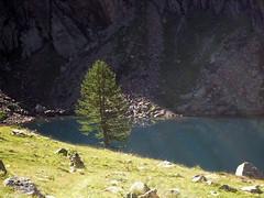 (105) (Mark Konick) Tags: italy italie italia italien france francia frankreich alpen alpes alpi alps backpacking bergsee bergtour bergwandern bivouac gebirge hiking lac lago lake markkonick montagnes mountains nathaliedeligeon randonne trekking wandern bouquetin ibex cabramonts stambecco steinbock chamois camoscio gamuza rebeco gams gmse gemse gmsbock gemsbock vacas khe mucche vacche cows cascade chutedeau waterfall wasserfall cascata cascada saltodeagua