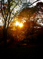 Autumn Light Through Trees - Central Park - New York City (Vivienne Gucwa) Tags: nyc newyorkcity autumn autumnfoliage sunset fall nature beautiful landscape pretty centralpark manhattan fallfoliage gothamist curbed autumnsun wnyc nycsunset autumnsunset nycautumn fallsun centralparkautumn fallnewyorkcity newyorkphotography centralparktrees newyorkcityphotography centralparksunset fallnyc newyorkcityautumn manhattanautumn centralparklandscape centralparkphotography centralparkevening