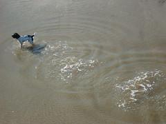 Fetch! (notFlunky) Tags: uk sea england dog water liverpool pier splash southport merseyside nttw