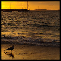 Slo el mar permanece, el da ya se va (Rodion Quidam) Tags: sunset sea orange reflection water yellow sailboat port puerto boat mar sand agua barca barco ship sundown dusk seagull gull hill wave arena galicia amarillo foam reflejo puestadesol mast colina naranja gaviota ola anochecer espuma velero marn mstil aguete radepontevedra zuiko50mmf18 flickrstruereflectionlevel1