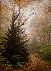 Trail at Dolly Sods (Singing Like Cicadas) Tags: autumn mist mountains fall nature fog outdoors path textures trail westvirginia sandstorm processing appalachia 2012 roundtrip dollysods randolphcounty laneville kimklassen onethousandgifts beyondlayers