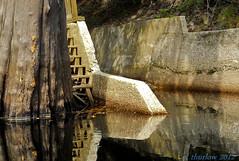 First Canoe Trip (caroltlw (on hiatus)) Tags: nikon canoe coolpix s3000 suwanneeriver