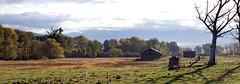 Barn and Tree (prwreden_98) Tags: autumn fall oregon or autumncolors allrightsreserved pinecreek copyrighted easternoregon bakercounty pinevalleyranch halfwayor philwreden powderrivercanyon prwreden halfwaymotel prwreden98
