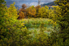 Oasis on Rowena Plateau (GeorgeOfTheGorge) Tags: oregon unitedstates wetlands pacificnorthwest marsh columbiarivergorge natureconservancy mosier nationalscenicarea tommccallnaturepreserve rowenacreat