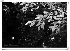 Still Remember (Johnny Kwan) Tags: bw leaves japan still remember nex