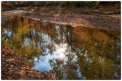 Still Stream - Rockville, MD (gastwa) Tags: park autumn fall nature creek john landscape dc washington cabin nikon focus scenery stream 28mm maryland andrew full frame relection manual fullframe fx f28 rockville ais d800 yabbadabbadoo gastwirth d800e andrewgastwirth
