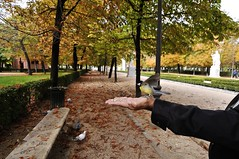 Bird, Madrid's Buen Retiro Park (Enrique Cspedes) Tags: madrid autumn crystalpalace buenretiropark