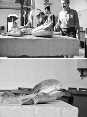 """""""vayan a lavarse las manos que en 10 est la comida"""" (quino para los amigos) Tags: fish pescaderia split pescado croacia pescar dsc0245"""